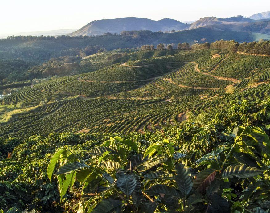 Kaffemarker i Brasil