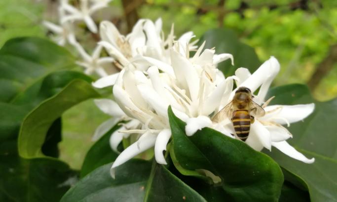 Bie og blomst