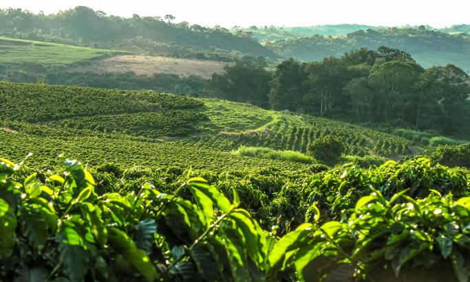 kaffefarm i brasil