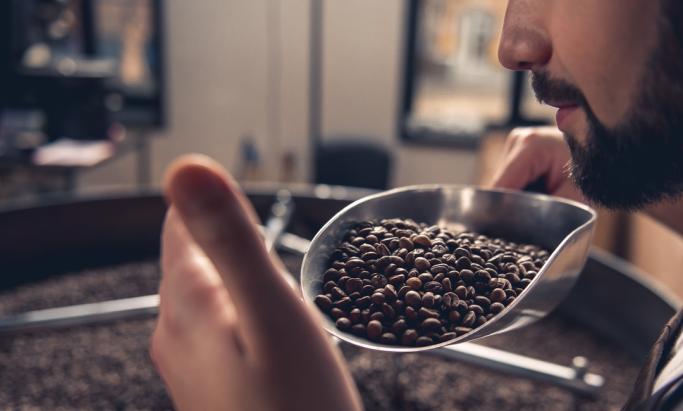 En mann lukter på kaffe i kaffebrenneri