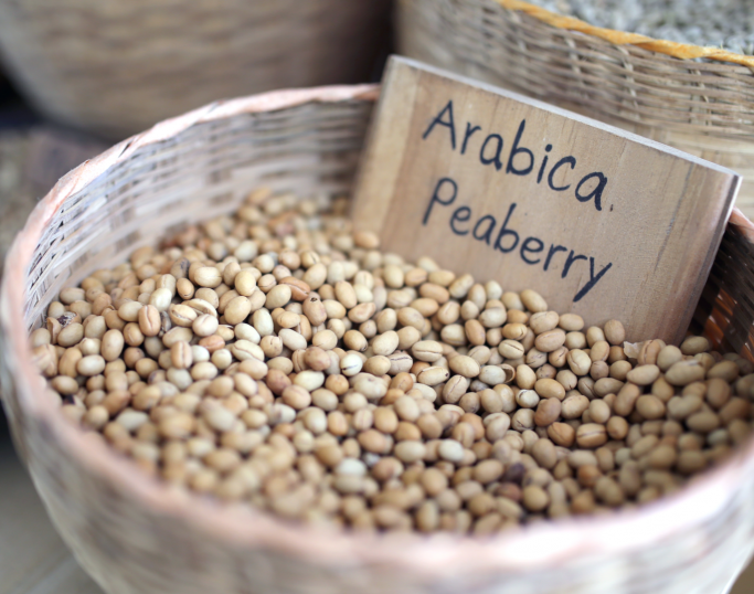 Arabica peaberry