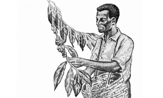 Illustrasjon av kaffebonde