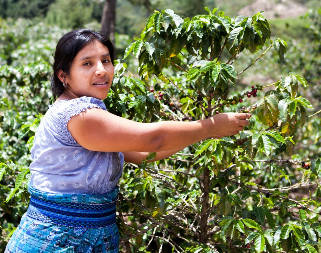 Kvinnelig kaffebonde i Guatemala
