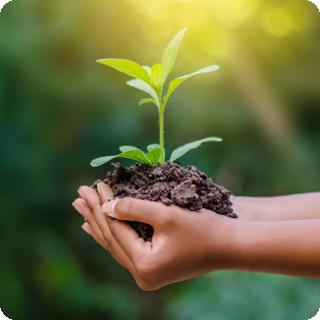 Spirende kaffeplante for et bærekraftig landbruk
